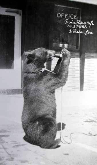 Bears As Art and Social Criticism: Denial