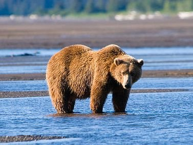 Bears as Art and Social Criticism: Self-Sufficiency