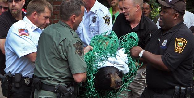 Bears as Art and Social Criticism: Allegiance