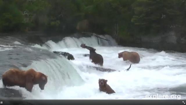 Bears as Art and Social Criticism: Prosperity