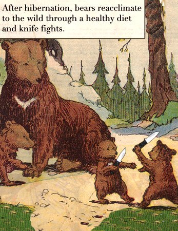 Bears as Art and Social Criticism: Transcendence